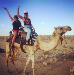 440 camels