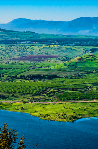 PERSPECTIVES from the Golan Heights